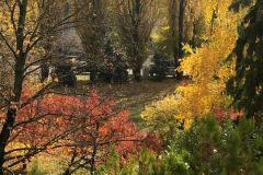 őszi udvar